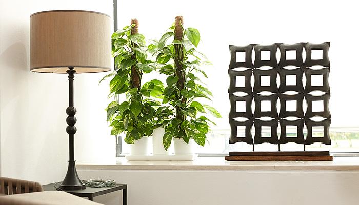 Minigarden e plantas de interior para uma casa mais bonita - Plantas de interior bonitas ...