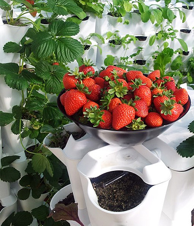 minigarden-strawberries