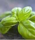 Manjericão, Sementes Biológicas Minigarden