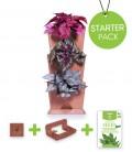 Starter Pack Minigarden Horta Vertical