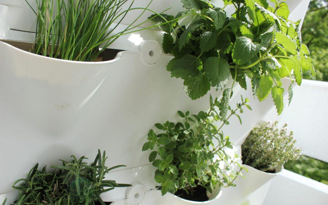 Jardinagem Urbana – Um Guia para Principiantes por Samantha Rose Hunt
